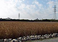 Canon_138c