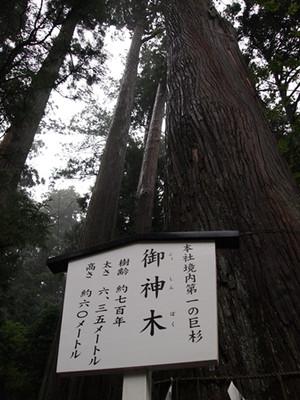 Jinboku