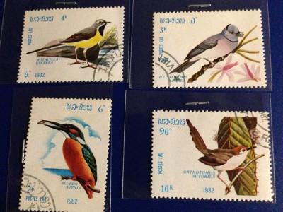 Bird_100r