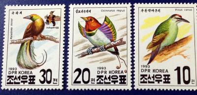 Bird_001r